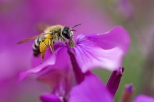 Crédit Photo : La cité de l'abeille