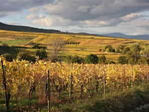 vignoble-d-eguisheim